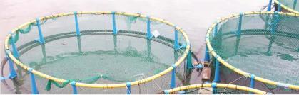 Imagen de portada de Investigación agraria y pesquera
