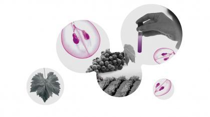Imagen de portada de El ámbito de la Viticultura y la Enología