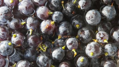 Imagen de portada de Instituto de Ciencias de la Vid y del Vino