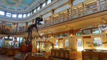 Redpath_Museum_-_McGill_University_-_Montreal,_Canada_-_DSC07893