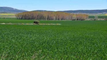 agriculturajpg